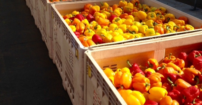 Donation to North OK Gleaners image