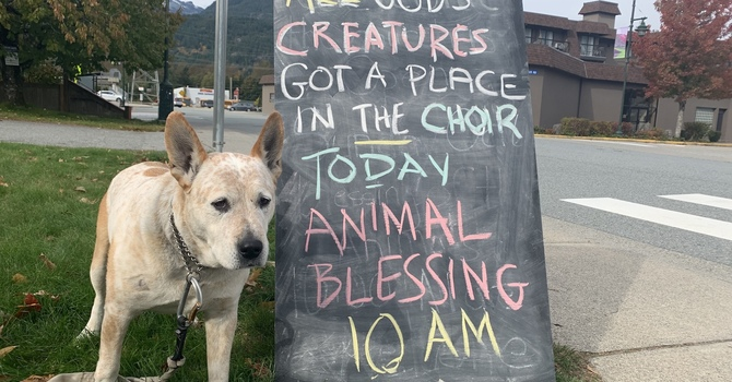 Pet Blessing Service at St Johns image