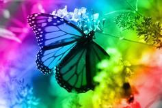 Spectrum%20butterfly