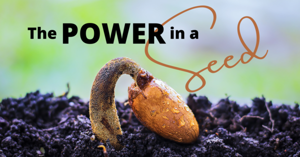 The POWER in a Seed