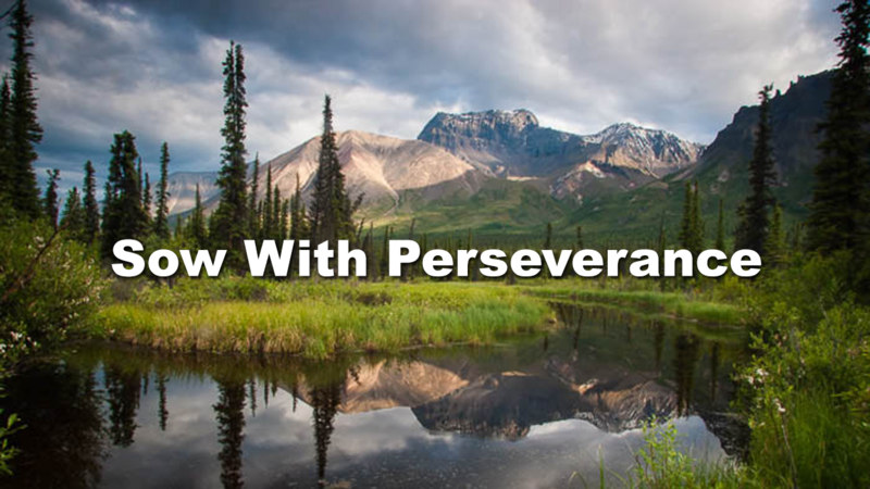Sow with perseverance