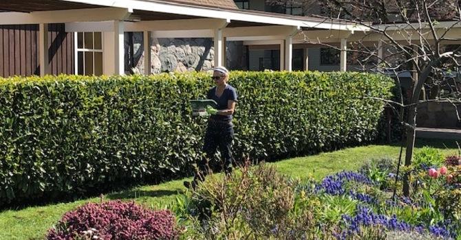 Gardening Update  image