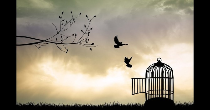 """""""Free to Fly"""""""