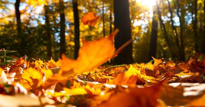 Sunday Service November 15th 2020 image