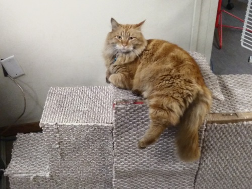 Chico  The Cat