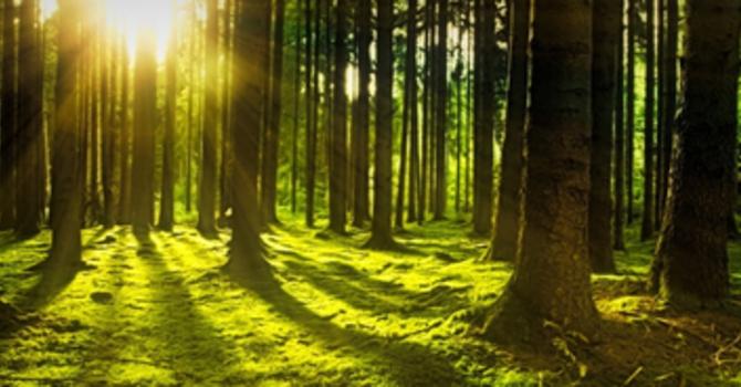 Choosing to Walk in the Spirit
