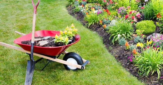Gardening Help Required! image