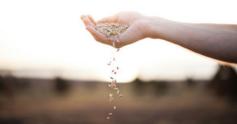 Wheat%20670x350
