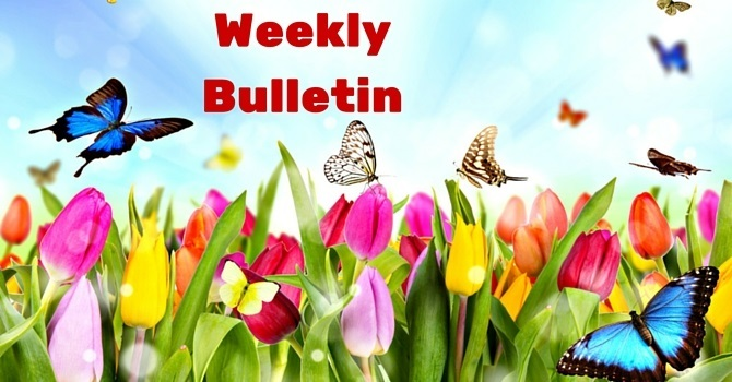 Weekly Bulletin   July 31, 2016 image