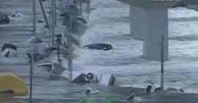 Primate Responds to Earthquake and Tsunami Disaster image