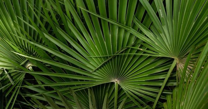 Worship for Palm Sunday - April 5, 2020