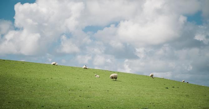 A Pastoral Letter image