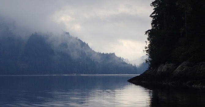 Enjoy good news about the Great Bear Rainforest image