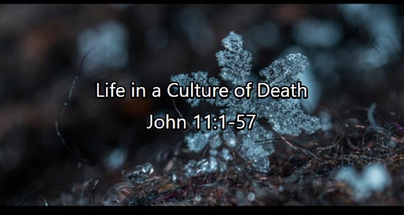 Sanctity of Life Sunday