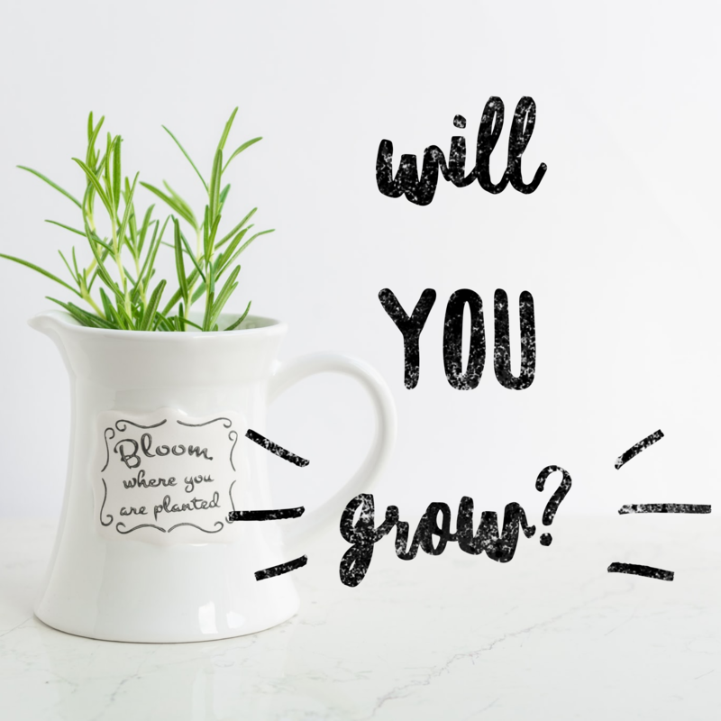 Are You Willing to Grow?