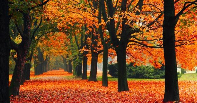 Fall Longings image