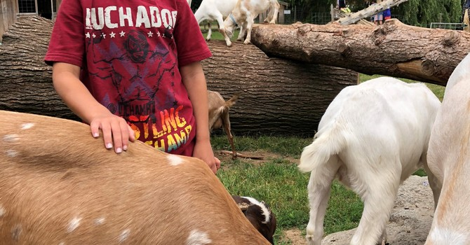 Creation Care Summer Kids Camp  image