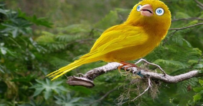 Canary or Confidant...? image