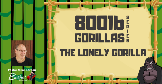 The Lonely Gorilla
