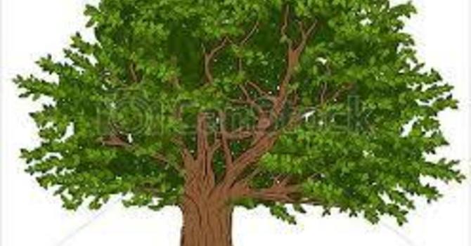 Heritage trees image