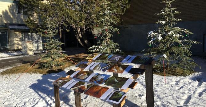 Outdoor Christmas Display image
