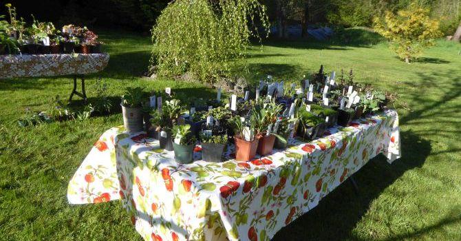 2017 Plant Sale image