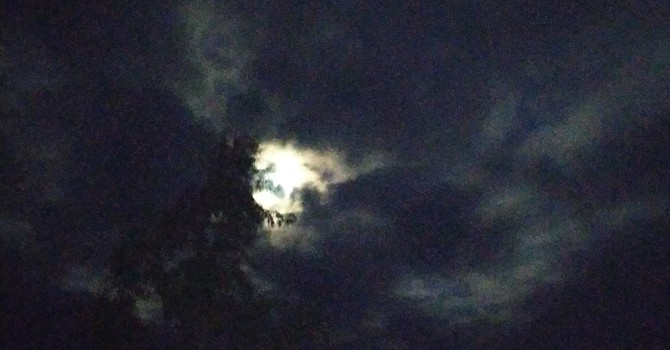 Longest Night image