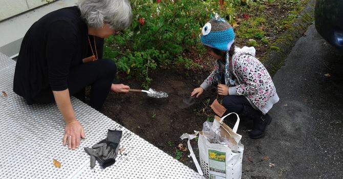 Planting Daffodils image