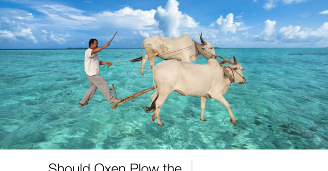 Should Oxen Plow the Sea?