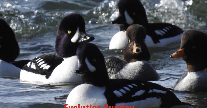 Evolution Sunday February 16 image