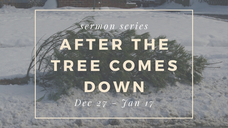 After the Tree Comes Down
