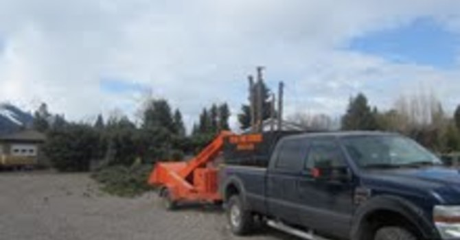 tree clippings image