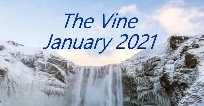 January Vine image