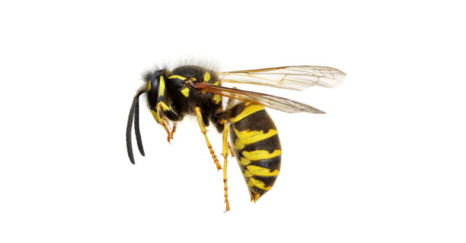 WASP UPDATE FROM St. Peter, Quamichan  image