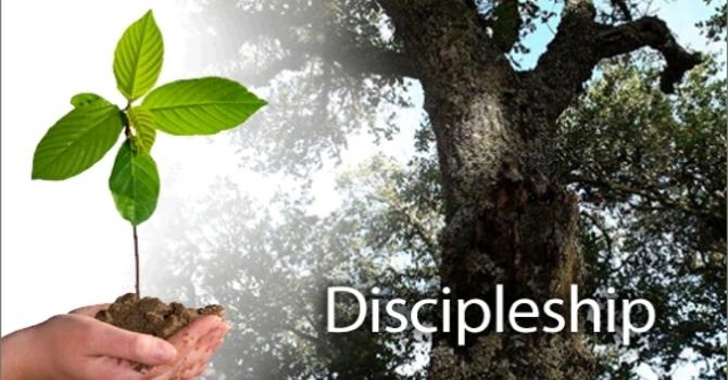 Discerning & Disarming