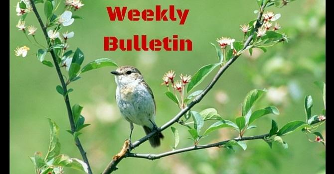 Weekly Bulletin | August 14, 2016 image