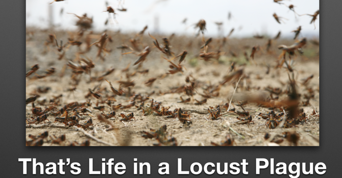 That's Life in a Locust Plague