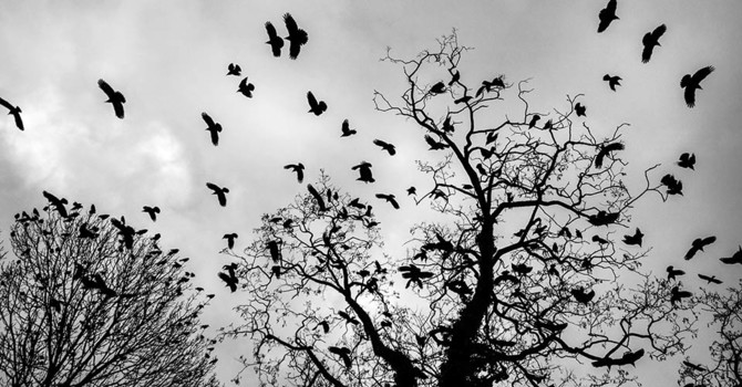 The Crows Know image
