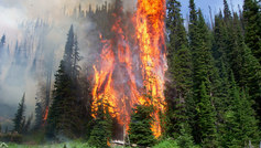 Wildfire forest fire full width nature