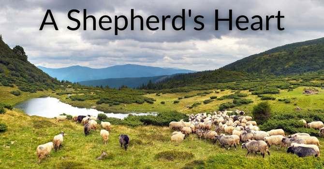 A Shepherd's Heart image