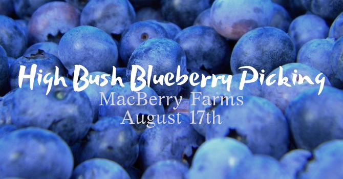 Blueberry Picking Trip!