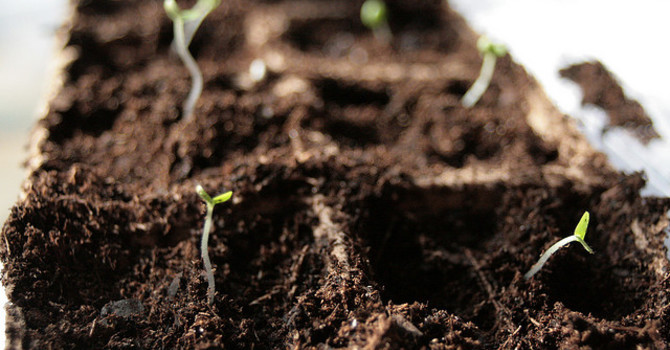 What Sowing A Seed Really Means image