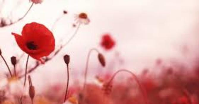 Remembrance Day Cenotaph Locations image