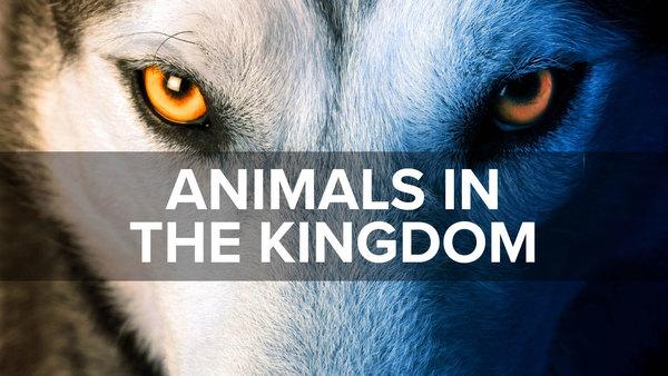 Animals in the Kingdom