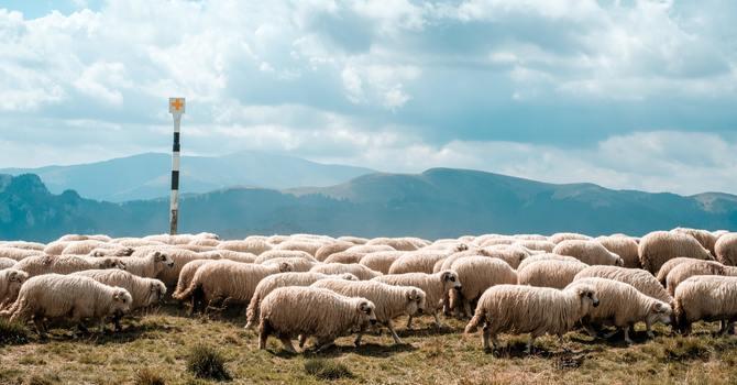The Great Shepherd image
