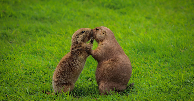 Groundhogs and hearts