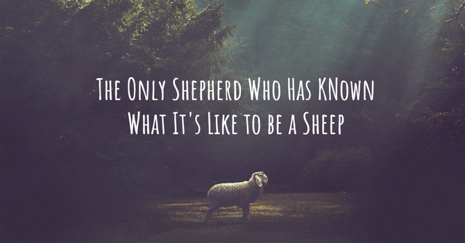The Only Shepherd Who Has Known What It's Like to be a Sheep image
