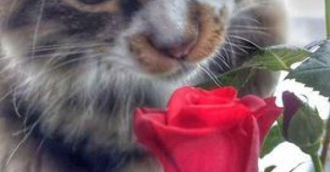 St. Valentine and love image