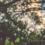 Devotional Email Lent Series