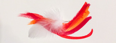 Feather%20dance%20image